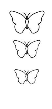 Motif Papillon-coque2