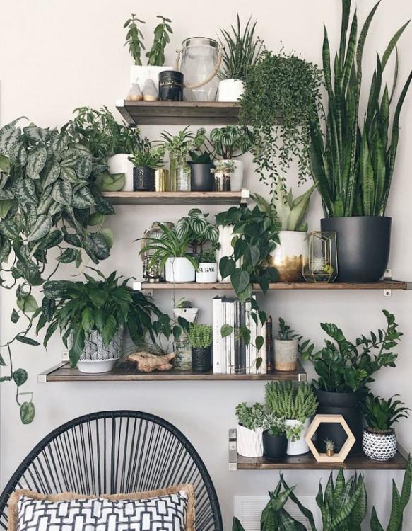 mur vegetalisé