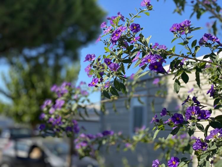 camping de la dragonniere bosquet de fleurs